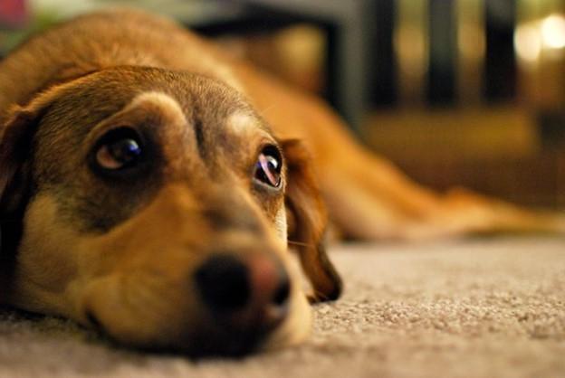 Những căn bệnh khác bạn có thể mắc phải từ vật nuôi của mình