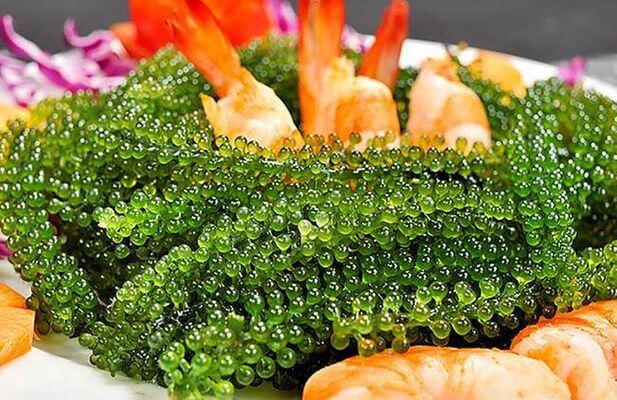 Salad rong nho với tôm tươi