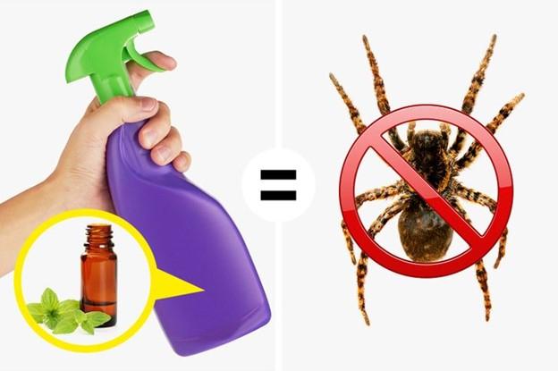 Sử dụng tinh dầu bạc hà để xua đuổi côn trùng gây hại