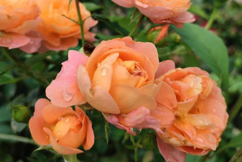 Ánh Quỳnh Flower