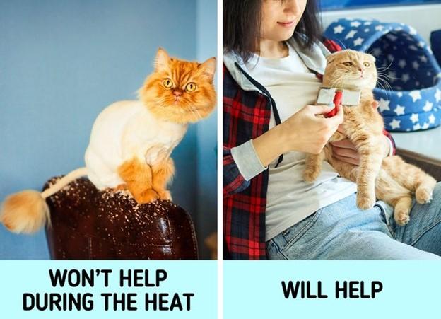 Chúng ta cạo lông thú cưng khi nắng nóng