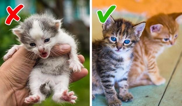 Chúng ta nhận nuôi mèo con và chó con quá nhỏ