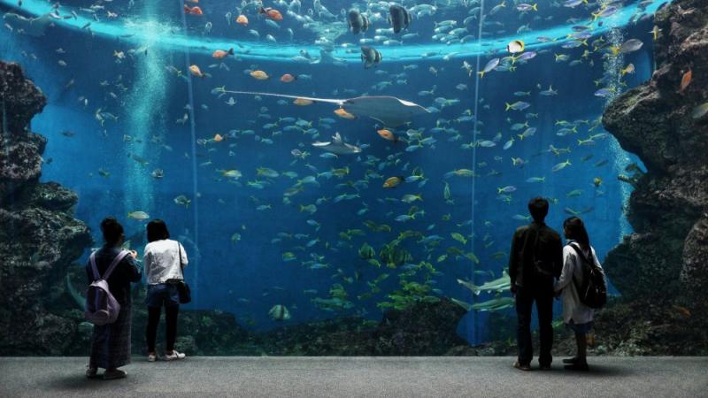 Kamogawa Sea World