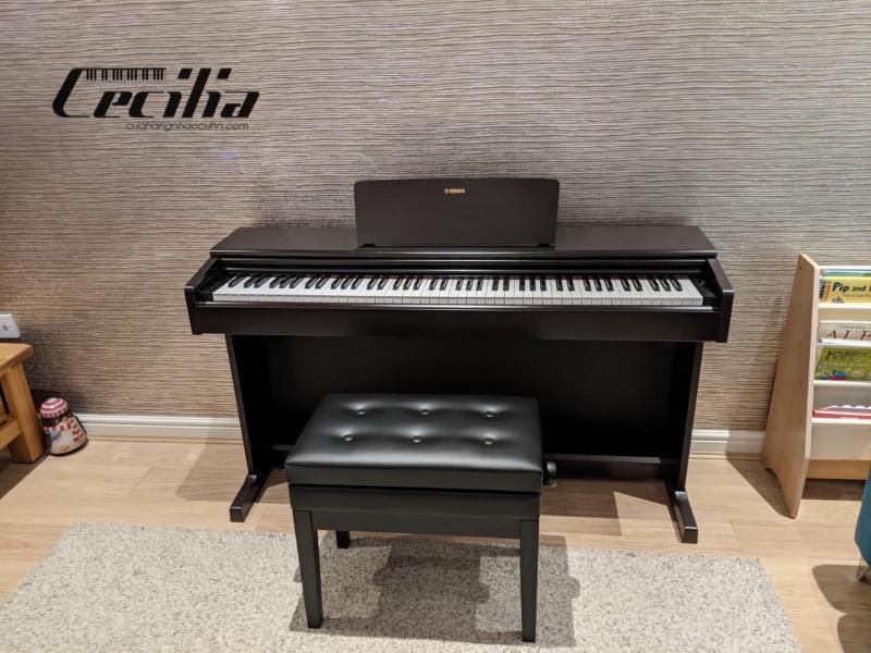 Nhạc cụ Cecilia